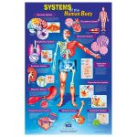 RVFM Systems of The Human Body Poster