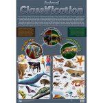Animal Classifications Wall Chart