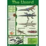 The Lizard Wall Chart