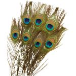 RVFM Peacock Feathers 300mm – Pack of 10