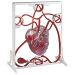Rapid Pumping Heart Model