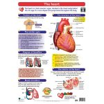 The Heart Wall Chart