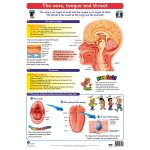 The Nose, Tongue and Throat Wall Chart