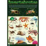 Invertebrates Wall Chart