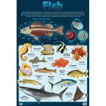 Fish Wall Chart