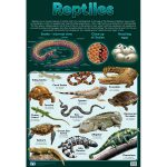 Reptiles Wall Chart
