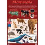 Mammals Wall Chart